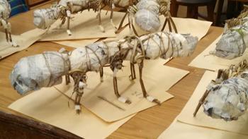 Kudzu Ants